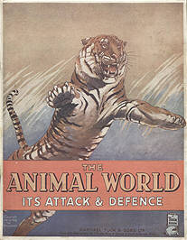 The Animal World - Its Attack and Defence by Eric Ennion.