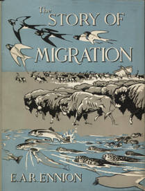 The Story of Migration by Eric Ennion.